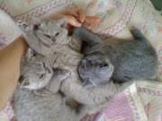 Котёнок - отличный подарок на день всех влюблённых!!!!!!!!